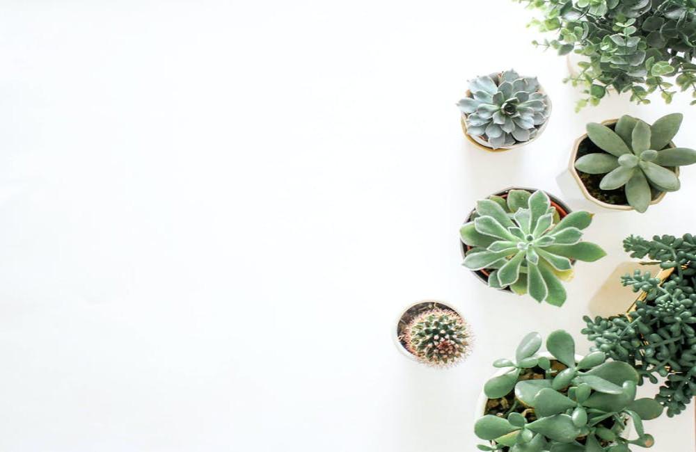 Waarom luchtzuiverende kamerplanten goed zijn voor de gezondheid